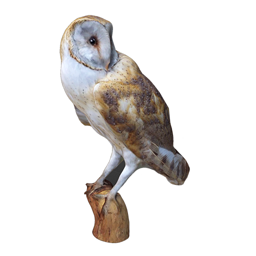 Barn owl - Content - ClassConnect
